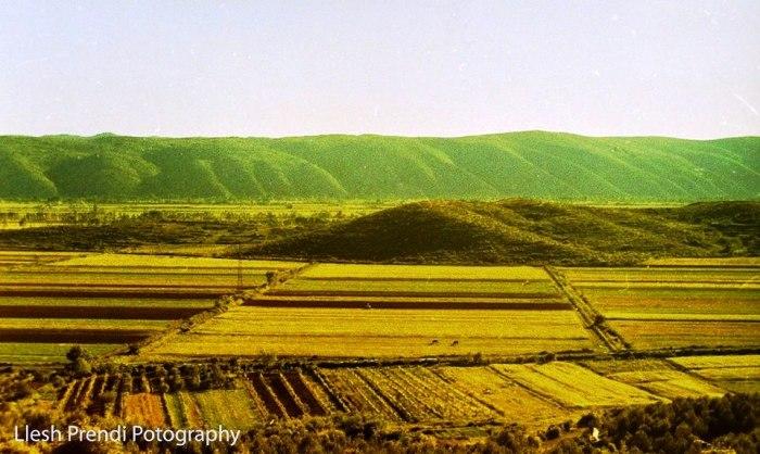 Bishti i kodrës së Dajçit