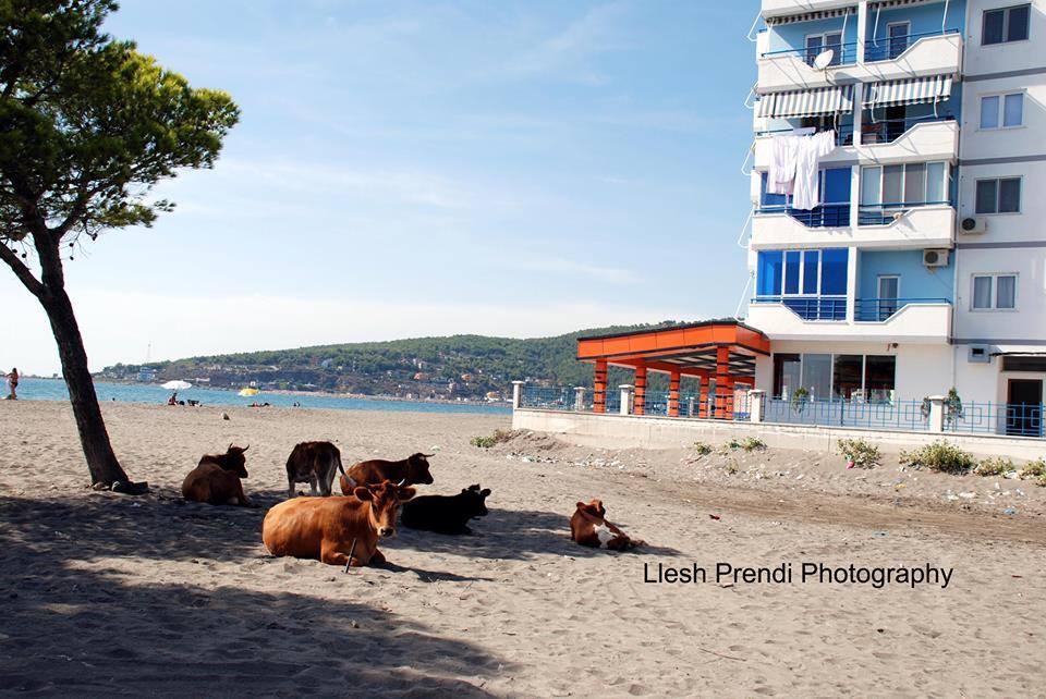 foto84(plazh modern)